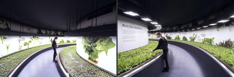 Masserdotti comunicazione visiva progetto FICO Eataly World